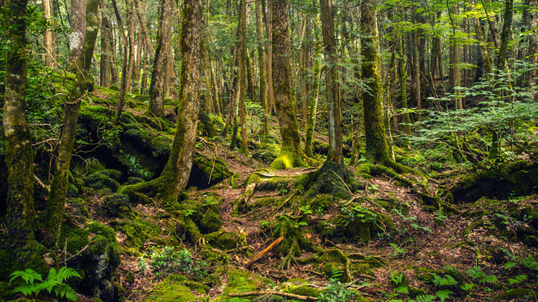 15 Eerie Things About Japan S Suicide Forest Mental Floss