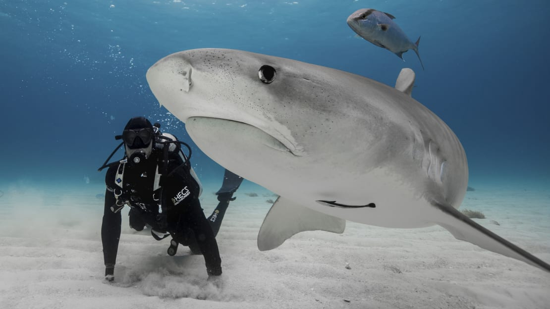 Paul de Gelder takes part in Shark Week 2019.