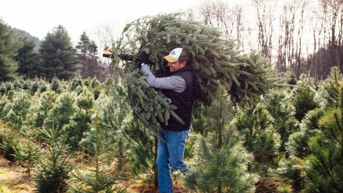 10 Secrets Of Christmas Tree Farmers Mental Floss
