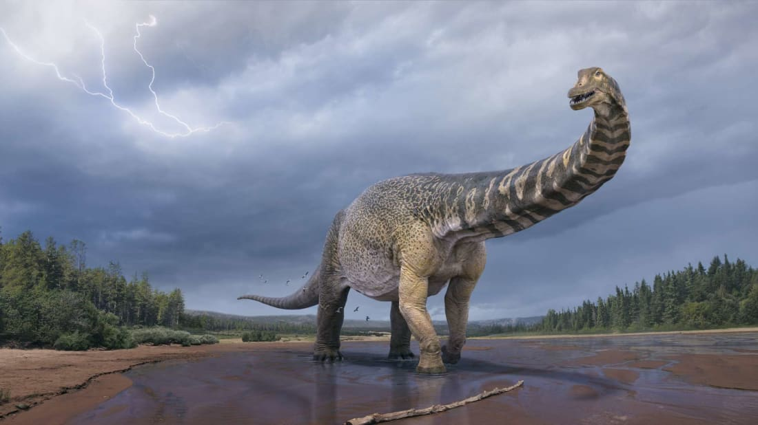 An illustration of what Australotitan cooperensis may have looked like.