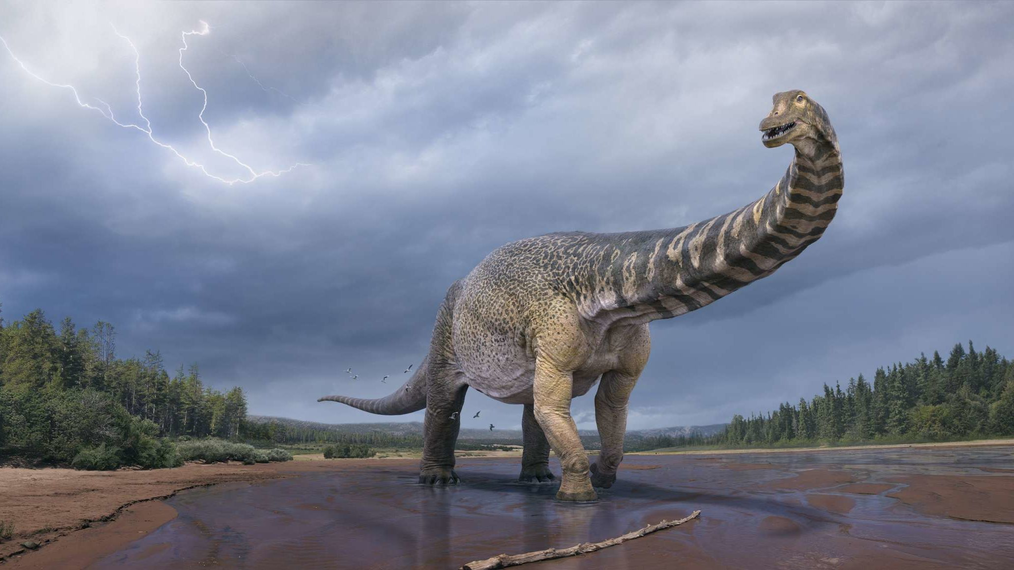 Meet 'Cooper,' a Recently Discovered Sauropod Believed to Be Australia's Largest Dinosaur Species