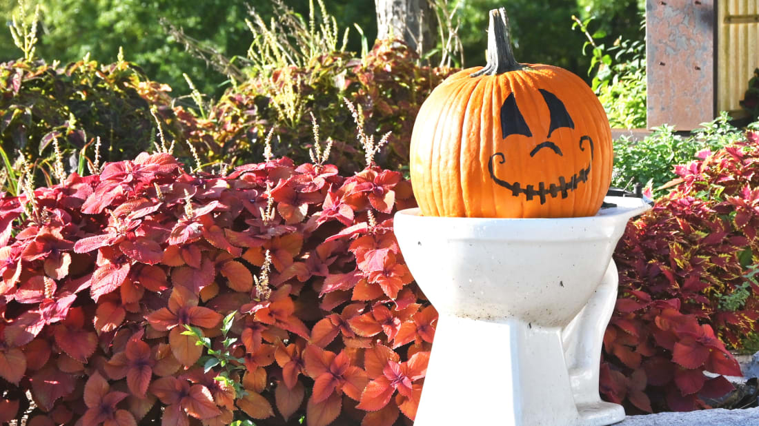 Here's a pumpkin on a toilet.