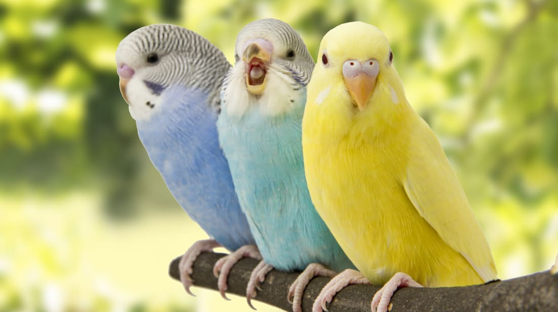 15 Amazing Facts About 15 Birds | Mental Floss