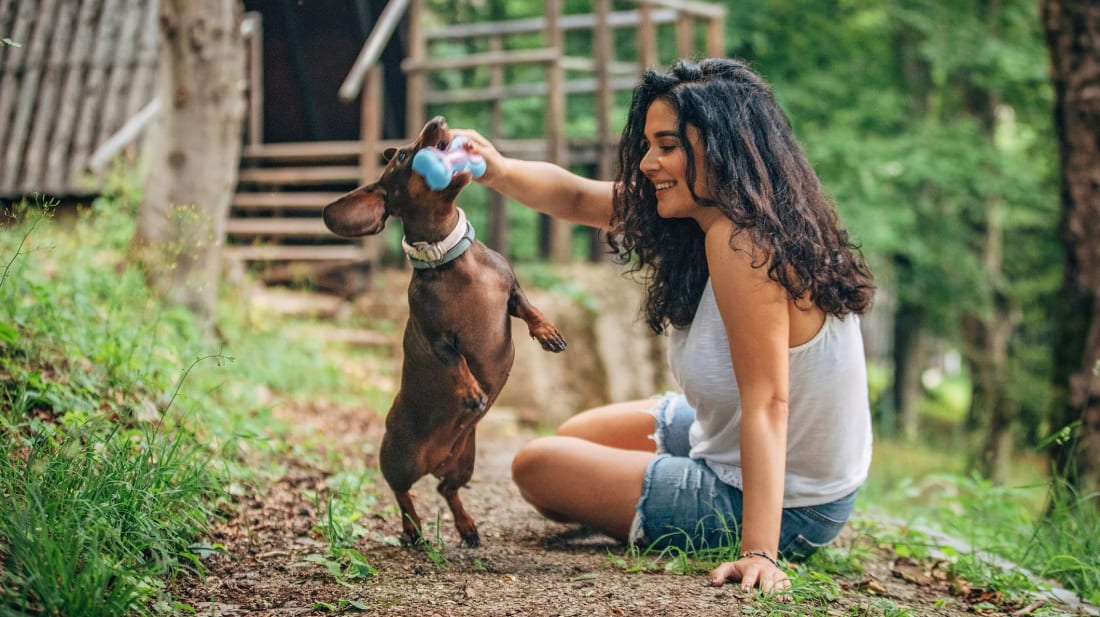 Want to give yourself a boost of happy? Buy your pooch a new toy!