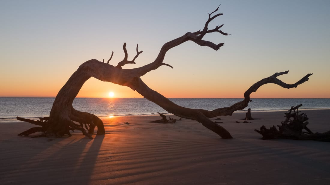 Driftwood Beach on Georgia's Jekyll Island