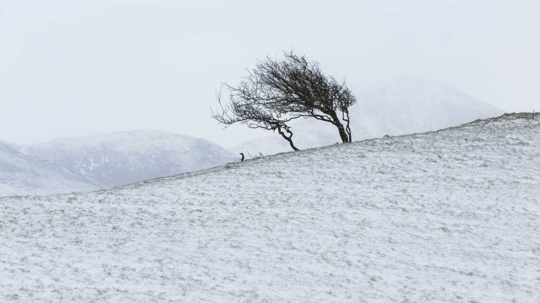 How Do You Calculate the Wind Chill? | Mental Floss