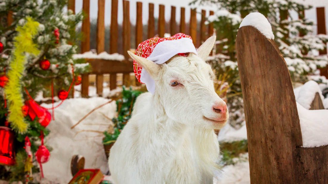 Christmas Goat.Bleat Along To Classic Holiday Tunes With This Goat