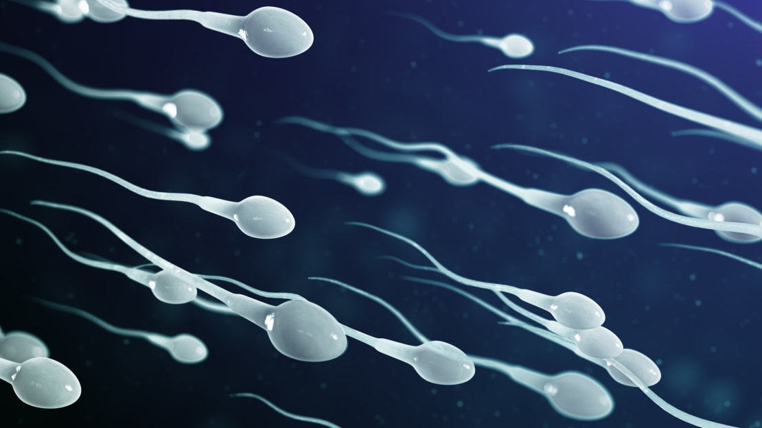 Sperm have been duping us for nearly 350 years.