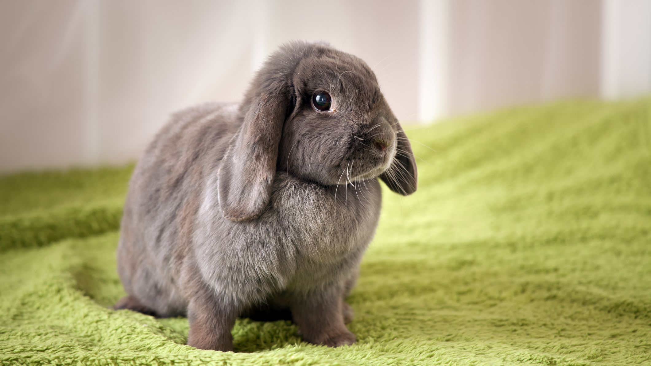 14 Fascinating Facts About Rabbits | Mental Floss