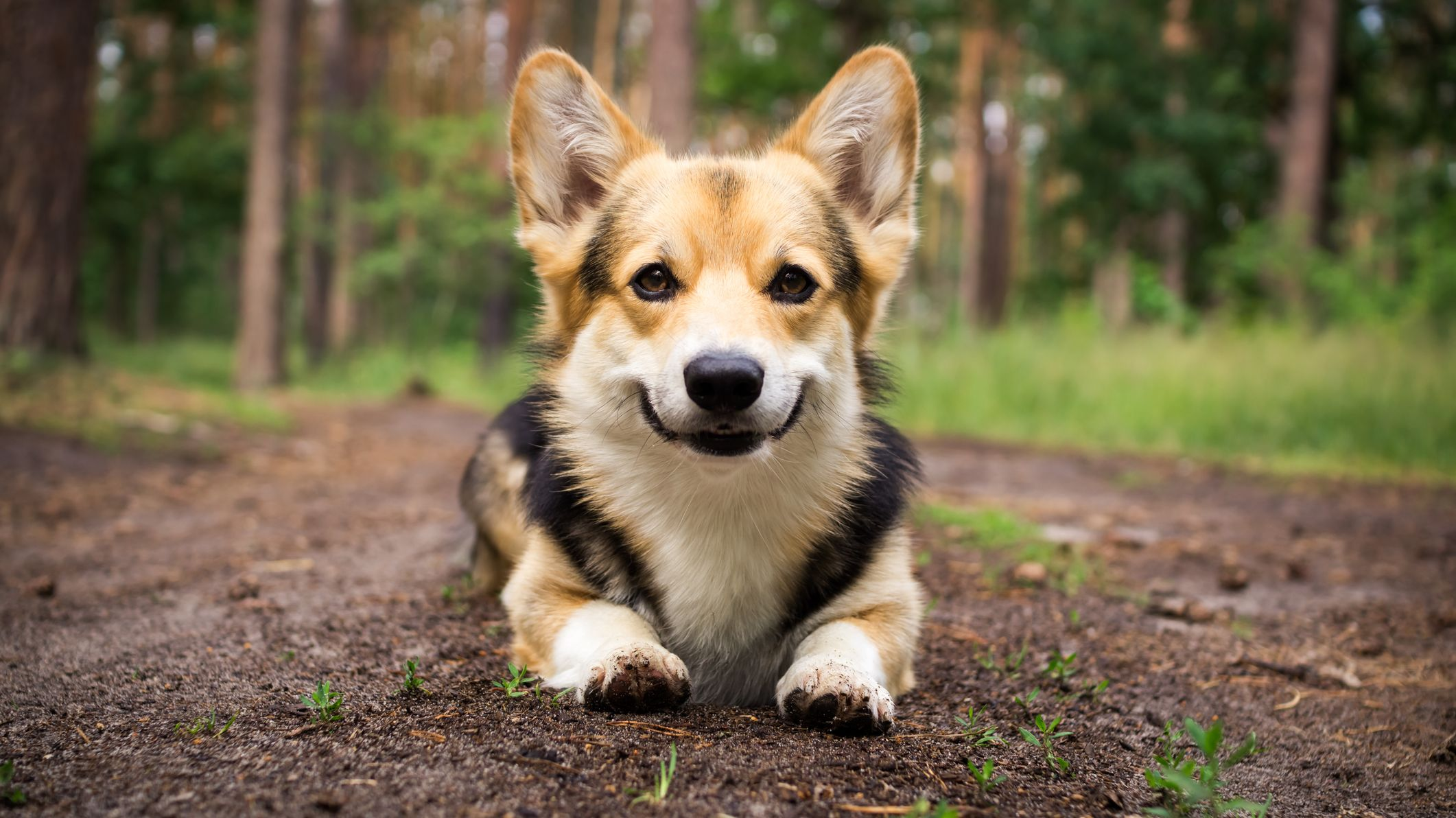 The 10 Most Popular Dog Names of 2019
