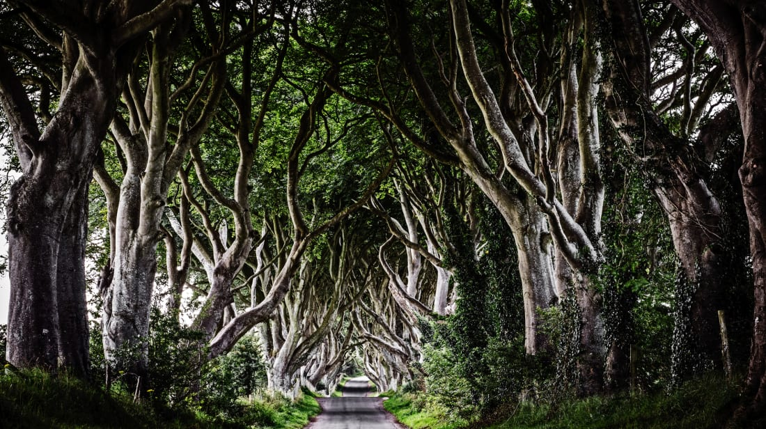 Northern Ireland's Dark Hedges