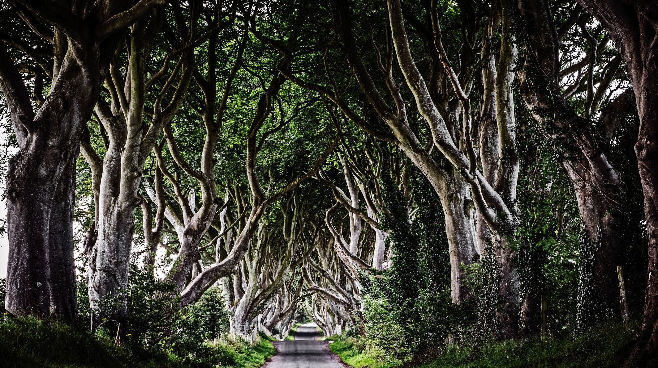 40 of the Most Interesting Trees Around the World