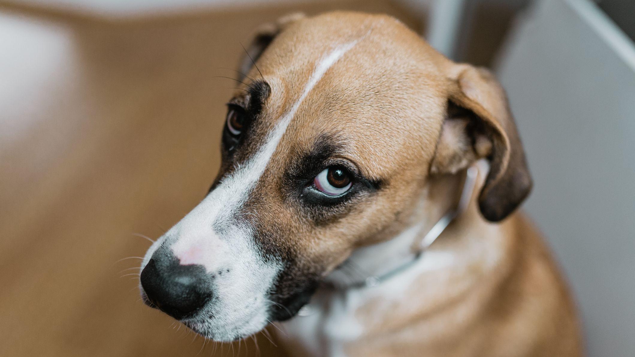 Ohio Bill Aims to Make Animal Cruelty a Felony