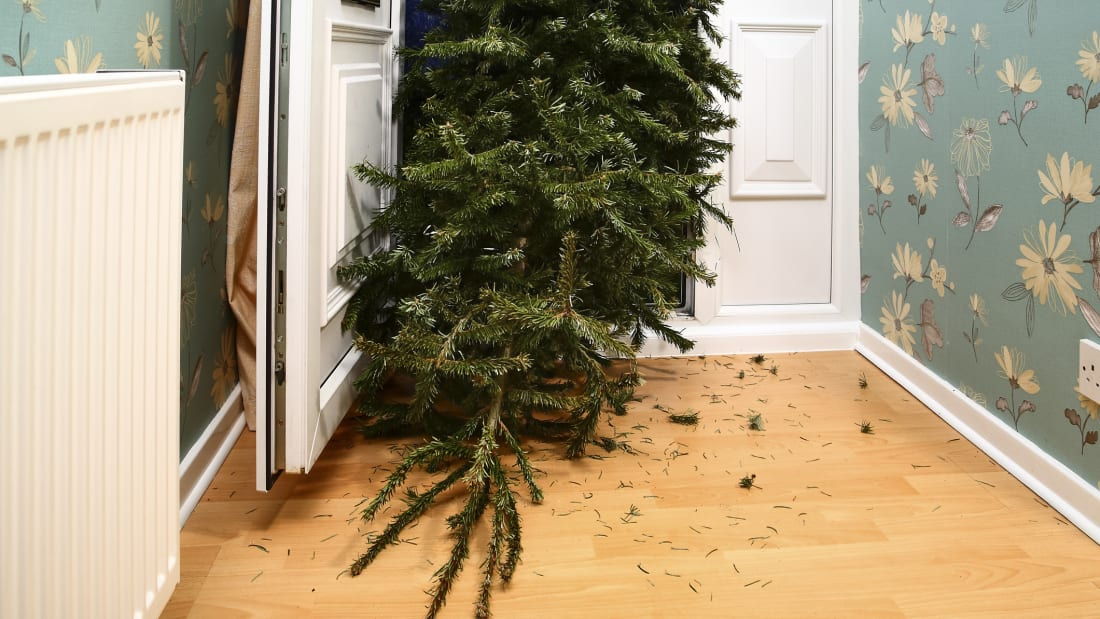 5 Eco Friendly Ways To Dispose Of Your Christmas Tree Mental Floss