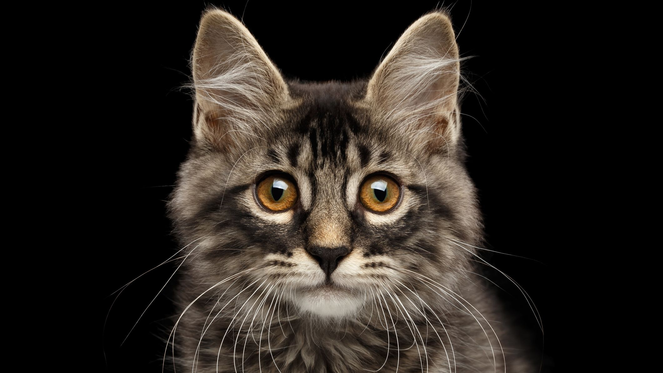 Cat Facts | Mental Floss