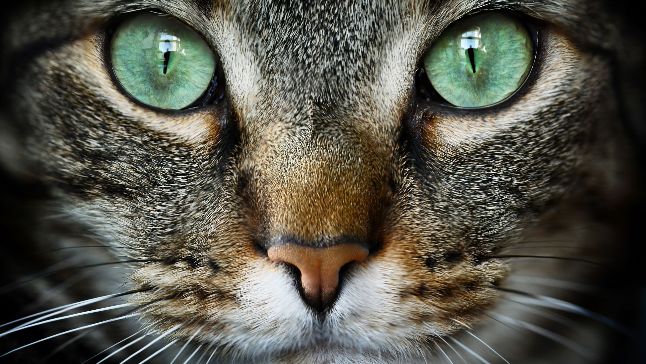 50 Fascinating Facts About Cats
