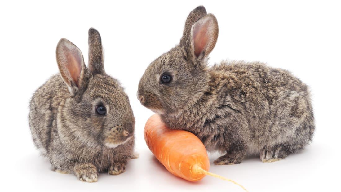 Do Rabbits Really Love Carrots Mental Floss