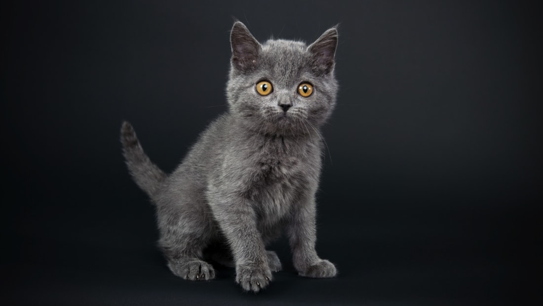 The 10 Most Popular Cat Names of 2018 | Mental Floss