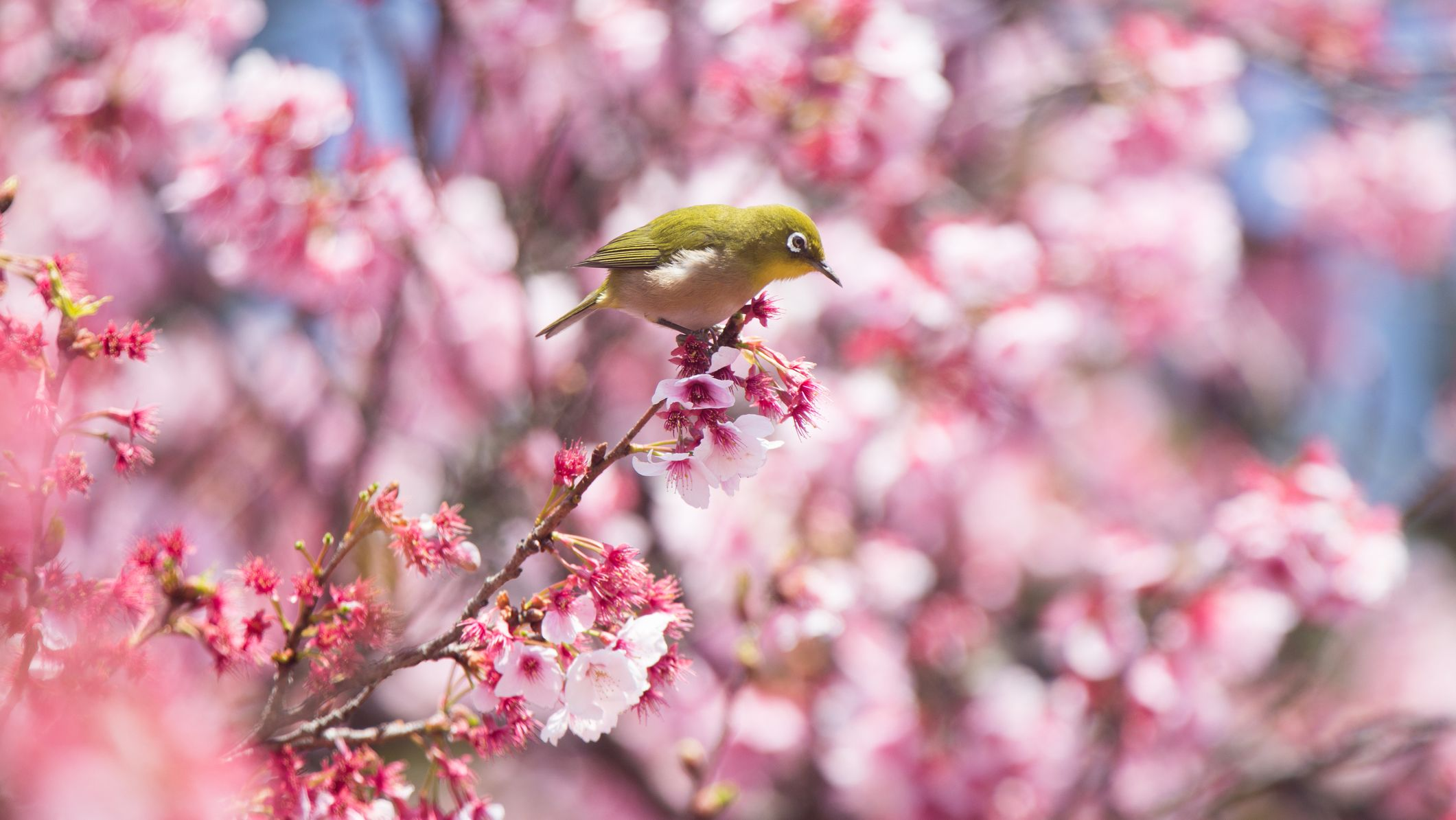 5 Fast Facts About the Spring Equinox - Mental Floss