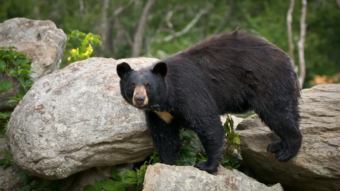 """Pro tip: Don't forget to yell """"hey, bear!"""" when entering outhouses in Alaska."""