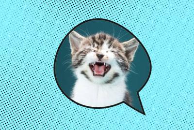 Ajwad Creative (Speech Bubble), Martin Poole (kitten) /iStock via Getty Images Plus