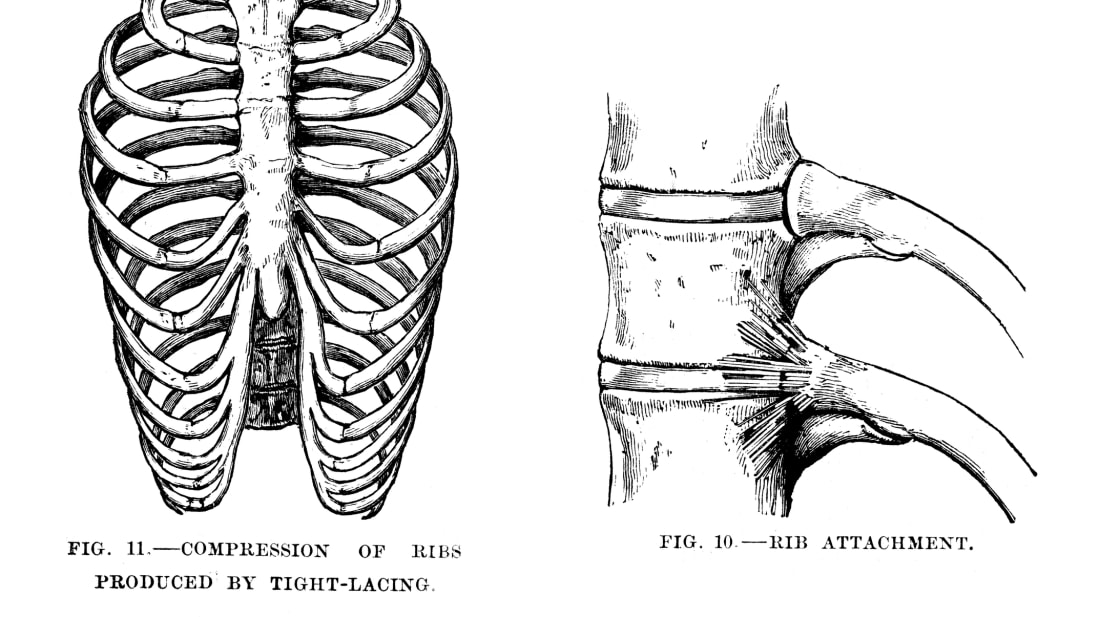 9 Interesting Facts About the Ribs | Mental Floss