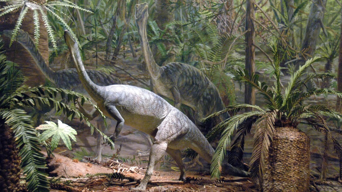 The Anchisaurus polyzelus is one of the dinosaur's duking it out for title of Massachusetts's state dino.