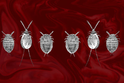 An illustration of cochineal insects, which brought vivid red hues to Europe.