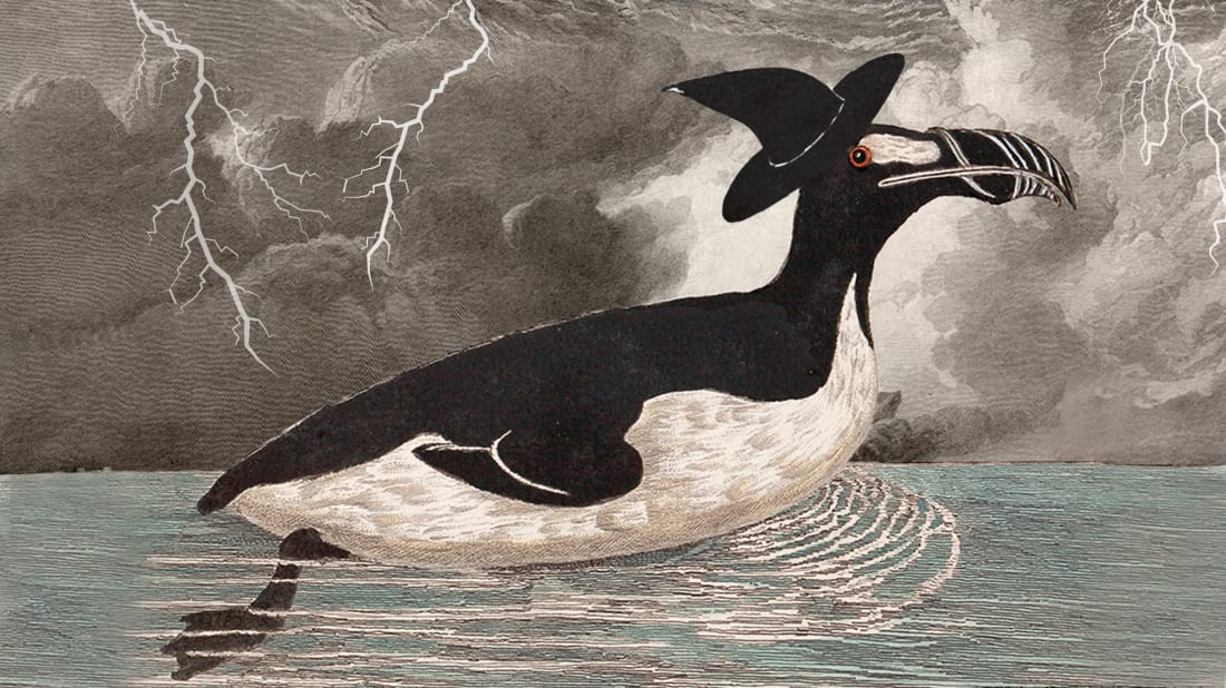 Photo illustration by Mental Floss. Great Auk: Nature Picture Library, Alamy. Hat, storm: iStock.