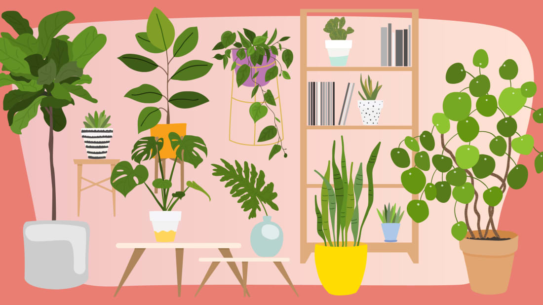 Plant Problems? The Sill's Resident Botanist Will Give You a