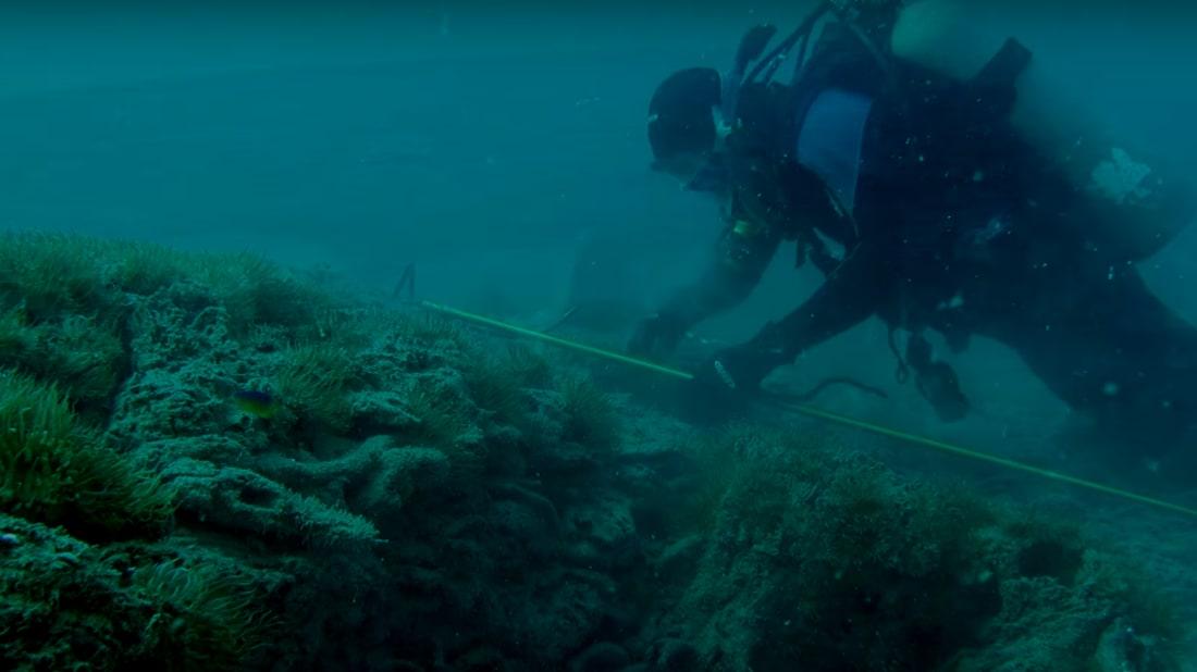 Screenshot, The Underwater Forest