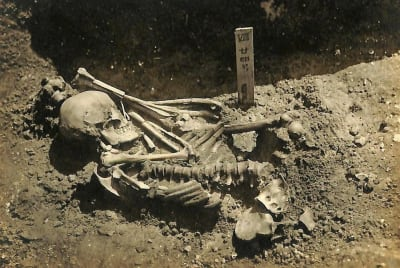 A photo of the skeleton taken when it was originally excavated from the burial site.