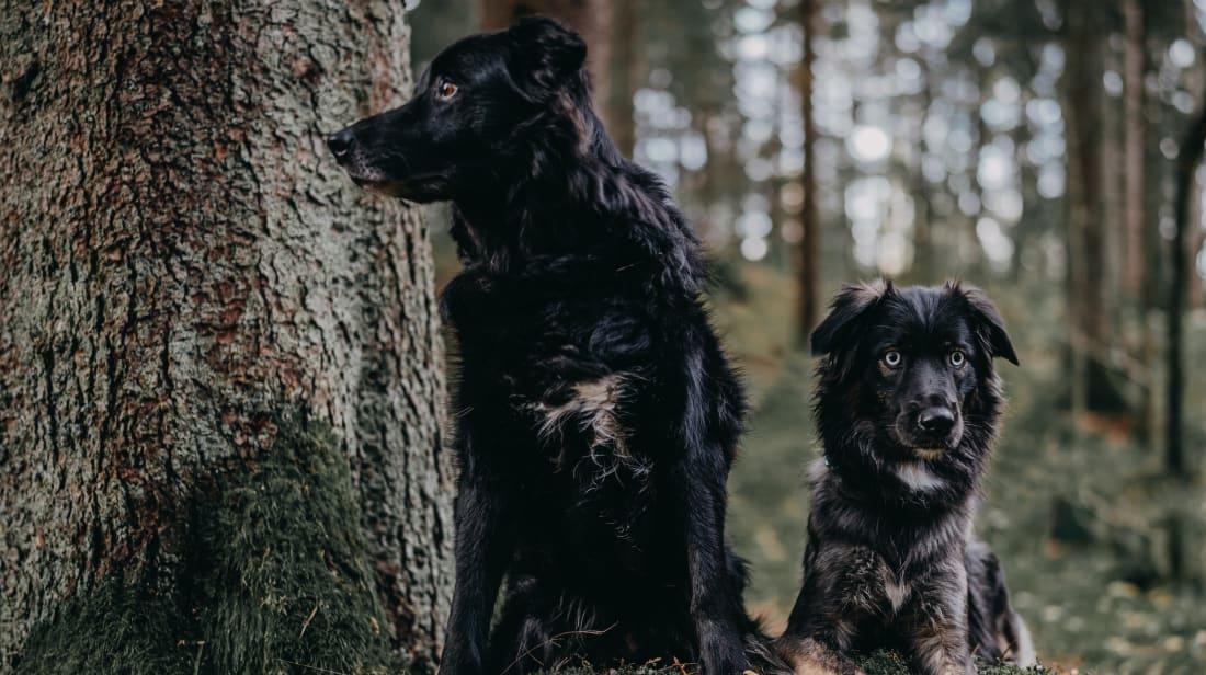 Photo by 🇸🇮 Janko Ferlič on Unsplash