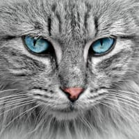 Test Your Cat Knowledge