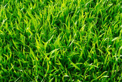 Grass: nature's torture device.