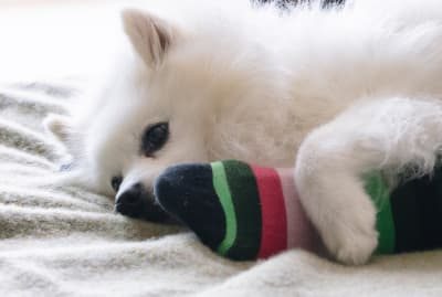 Dogs can benefit from your busted-up socks.