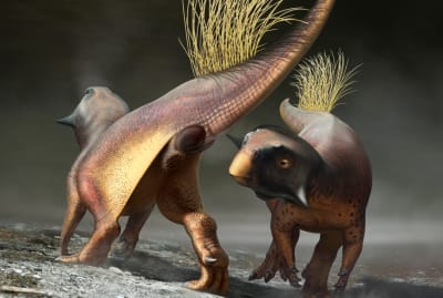Psittacosaurus may have attracted mates using its fetching rear end.
