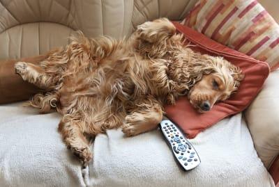 Portrait of a couch potato.
