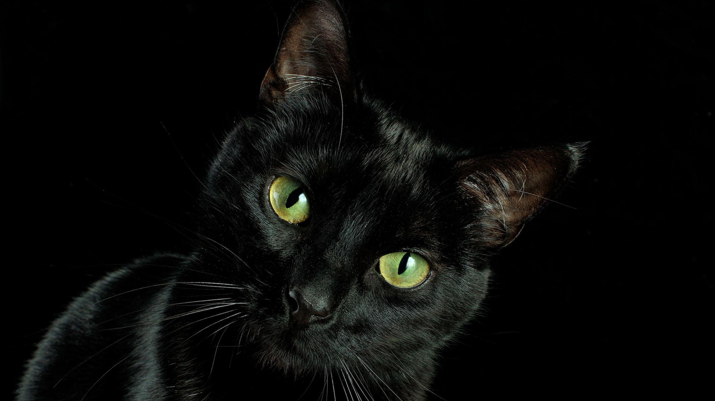 Black Cat Facts Mental Floss