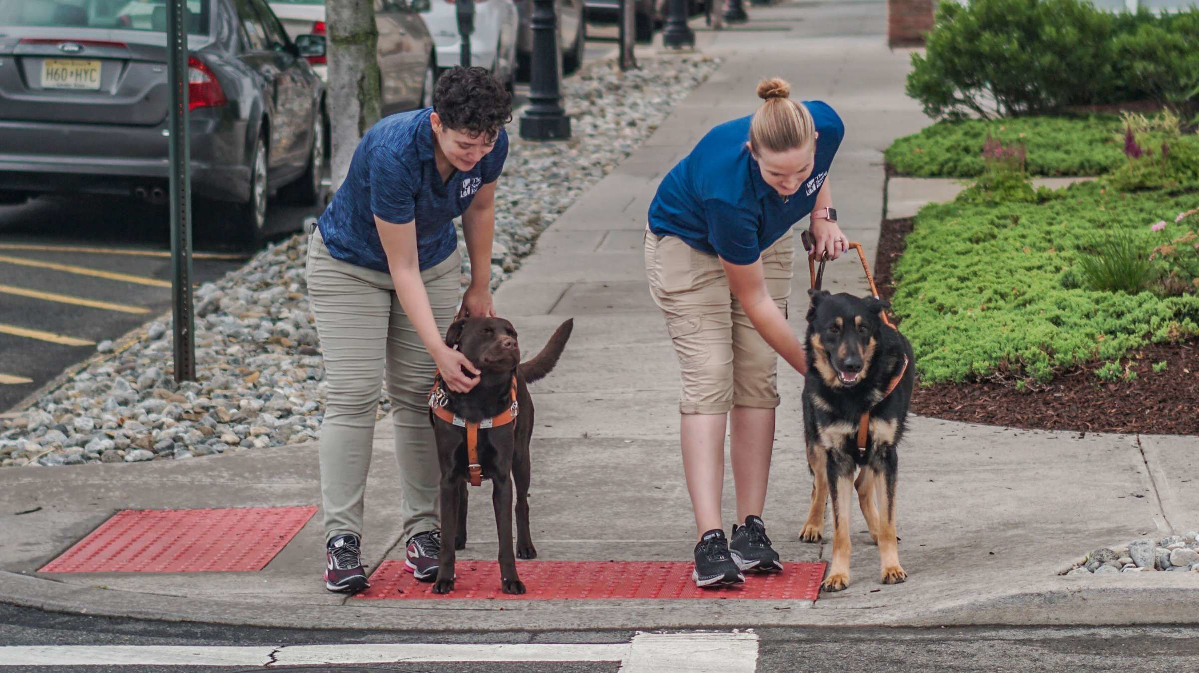 10 Secrets of Seeing Eye Dog Trainers