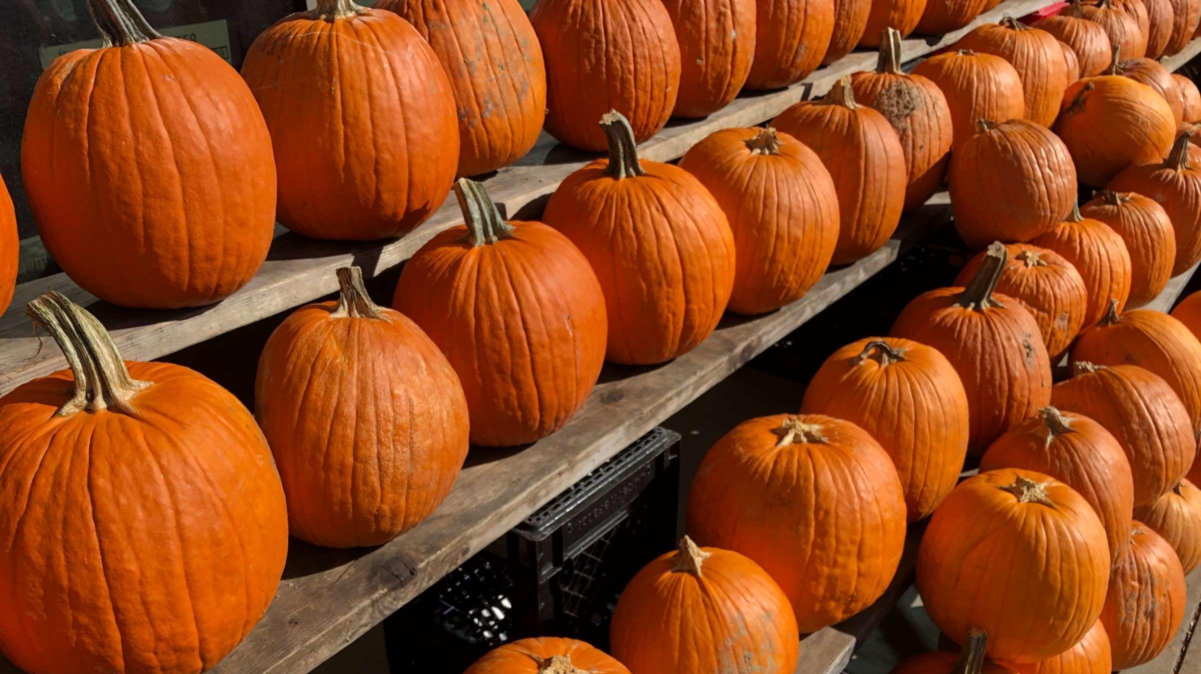 Are Halloween Pumpkins Edible?