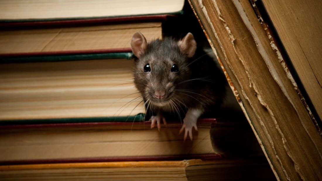A well-read rat is still a nuisance.