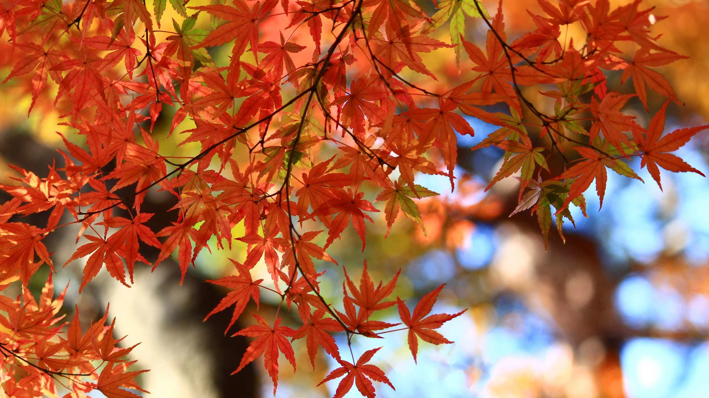 Fall Foliage Is Running Late This Year Mental Floss