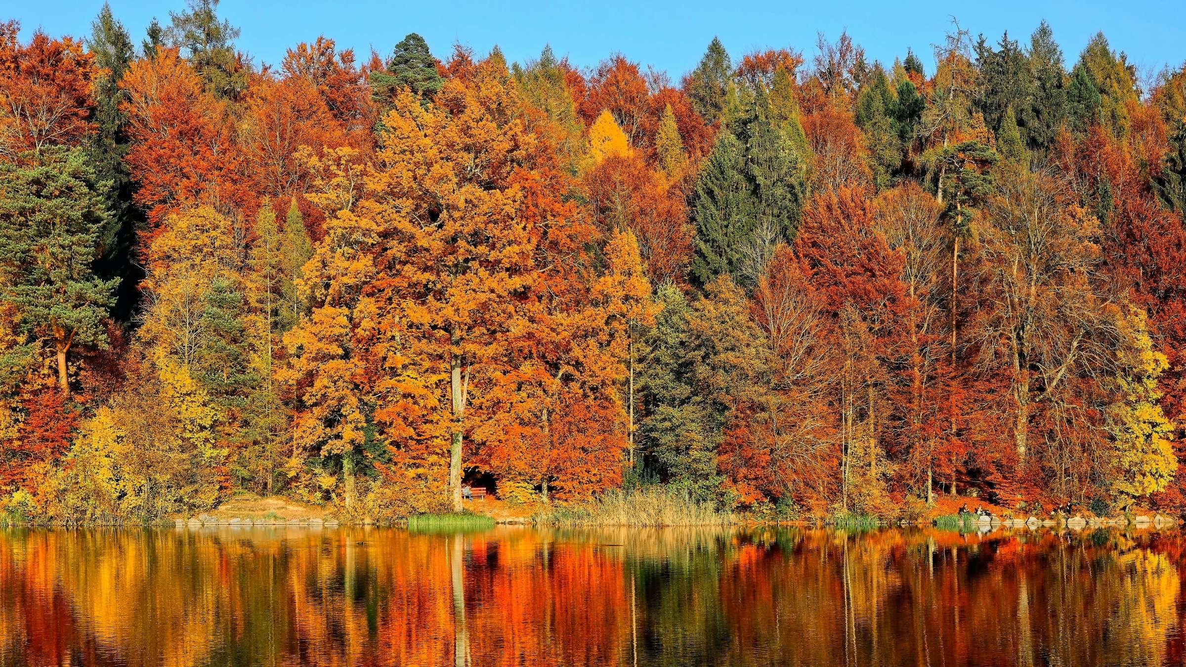 Take a Virtual Fall Foliage Tour With These Nature Webcams