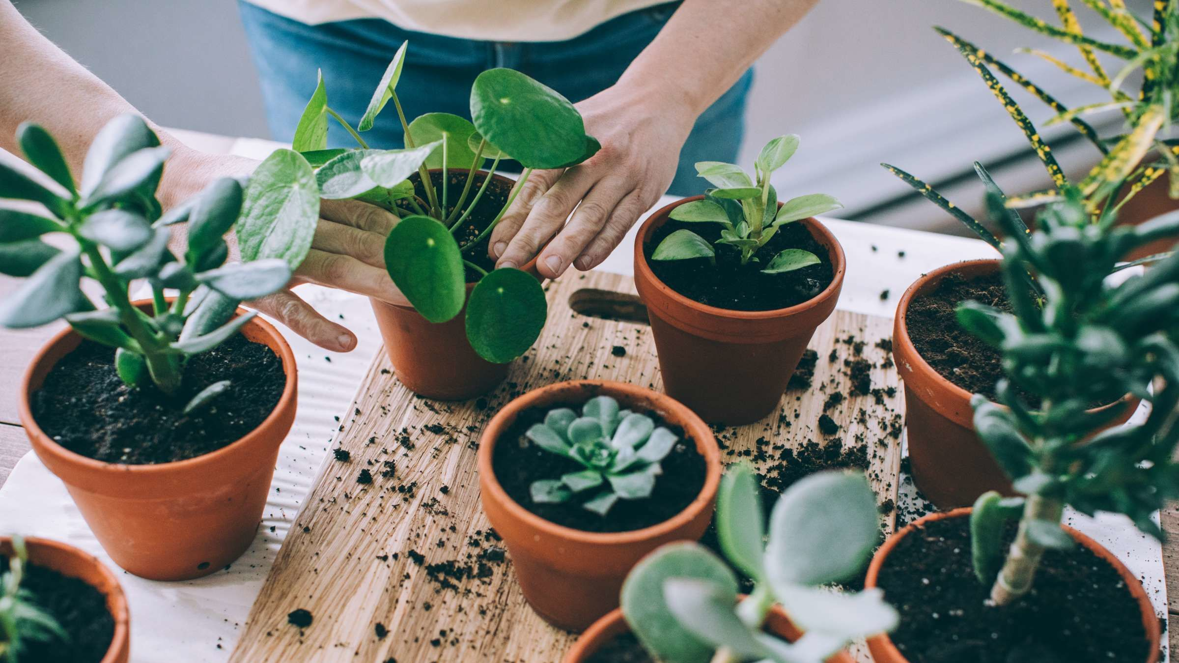 Why Lining Your Flower Pots With Coffee Filters Makes Houseplants Harder to Kill