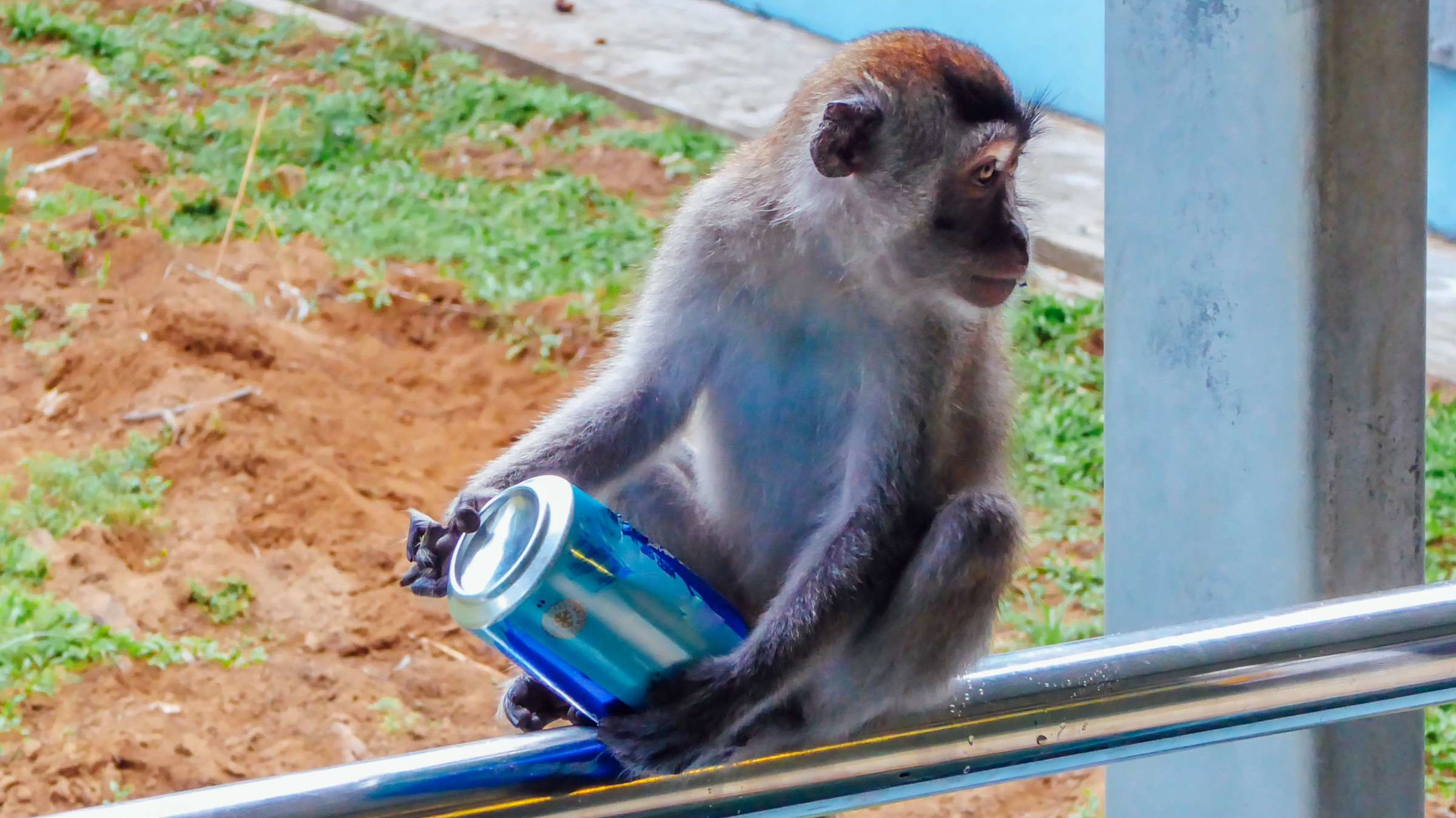 11 Times Drunk Animals Have Wreaked Havoc