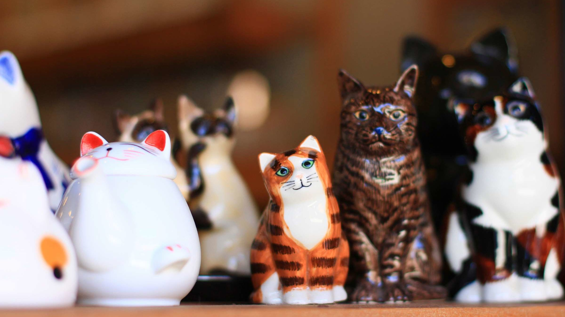 Poland Is Residence to a Very Tiny Cat Museum