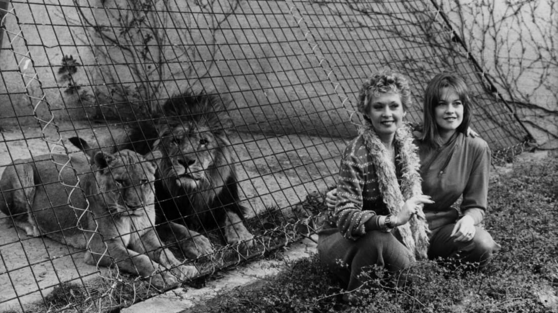 Tippi Hedren and Melanie Griffith with a couple of cool cats in 1982.