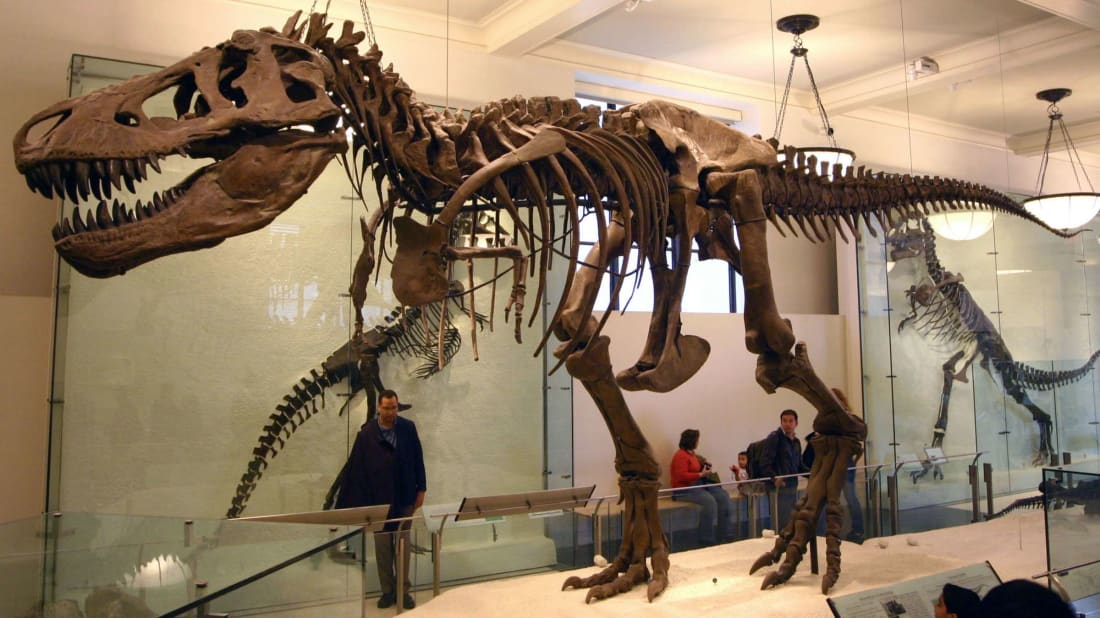 How the T. Rex at the American Museum of Natural History Became an Icon