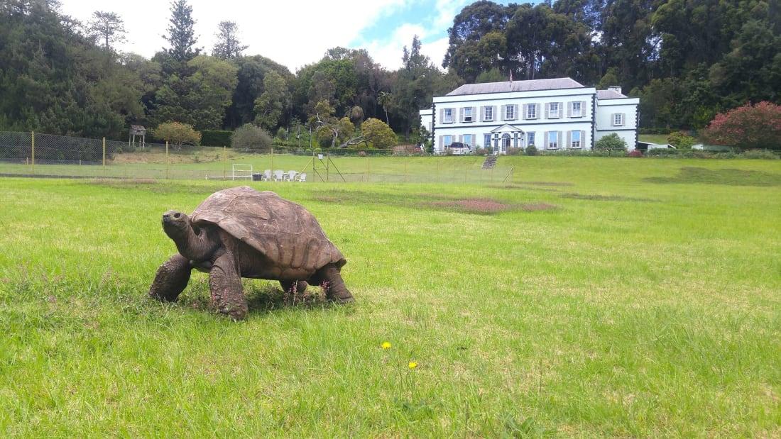 Jonathan, a Seychelles giant tortoise, is 189 years young.